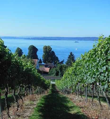 地中海のきれいな風景と葡萄畑