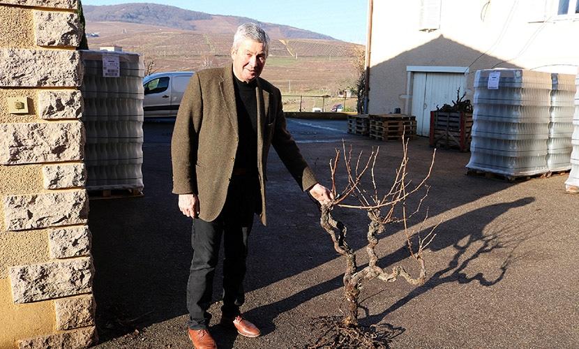 シャトーティヴァンのオーナーとぶどうの木